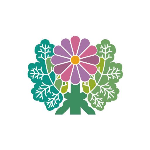 青山菊[白]